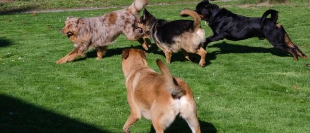 Qui suis-je ? - Pension canine familiale 44